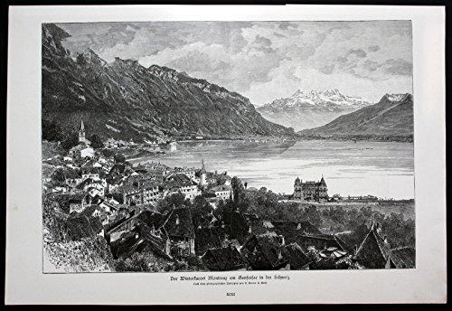 Berberitze Sauerdorn Kräuter Heilkräuter herbs herbal Lithographie