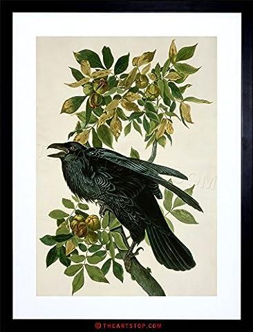 PAINTING NATURE ANIMAL BIRD AUDUBON RAVEN FRAMED PRINT F97X3583