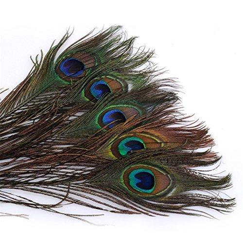 Piume di pavone 25-30cm / 10-12 lunghezza pollice piume naturali