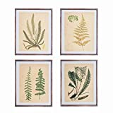 NIKKY HOME Vintage Four 11x14 Inch Framed Wall Decor with Fern Botanical Art Prints, Set of 4 - Framed