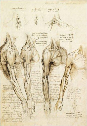Poster 70 x 100 cm: Muskeln von Schulter, Arm und Hals von Leonardo da Vinci - hochwertiger Kunstdruck, neues Kunstposter (Da Vinci Hals)