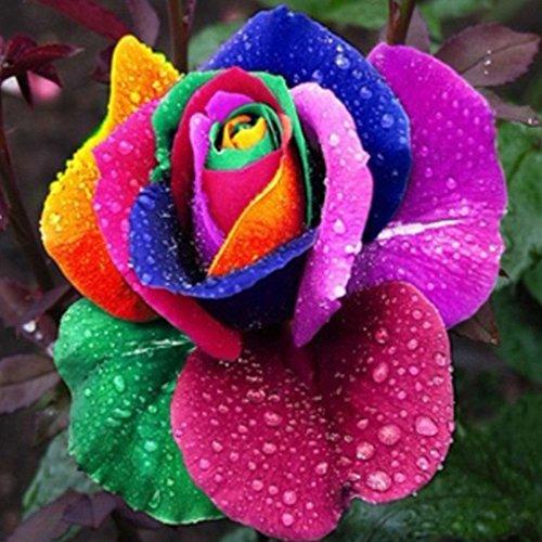 Cioler seme di fiore- 50pcs semi di rosa, semi di piante bonsai perenne semi di rose bonsai perenne fiori fiori ornamentali per il giardino di casa