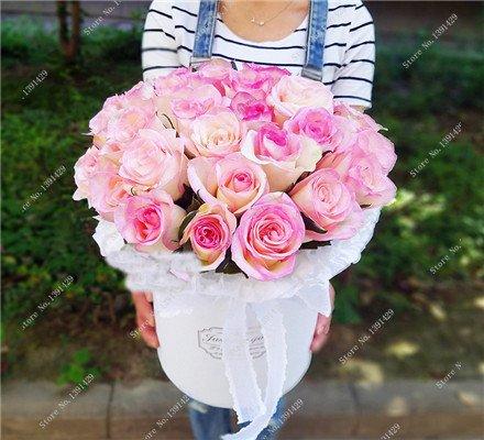 Exotique Rosas / Rose semences vivaces Jardin des plantes Bonsai Fleur, Pots de fleurs Pots décoratifs Aménagement paysager 120 Pcs / Sac 14
