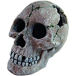 haquos Human Skull 2, 18x 13x 13cm