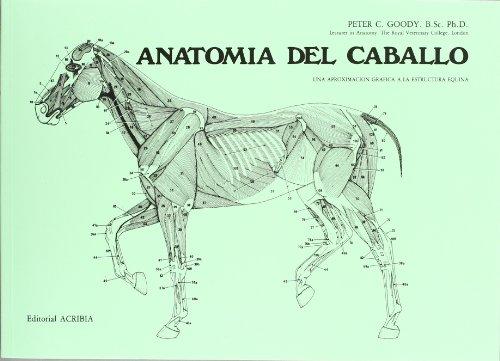 anatomia-del-caballo