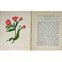 Colore Peloso Selvaggio dell'Erba del Salice di Anne Pratt dei