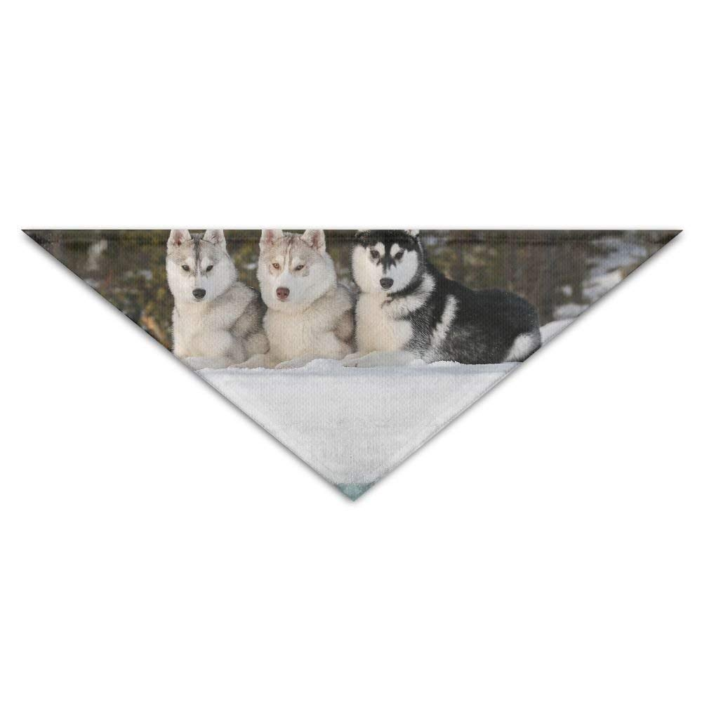 dfegyfr Sled Dog Siberian Husky Alaskan Malamute Pet Dog Cat Puppy Bandana Triangle Head Scarfs Accessories
