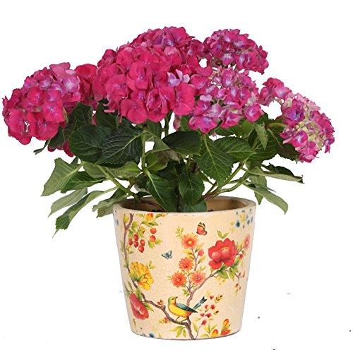 maceta-maceta-redonda-terracota-maceta-krakelee-intenso-diseno-de-flores-pintadas-a-mano-vidriado
