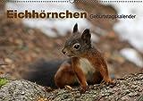 Eichhörnchen/Geburtstagskalender (Wandkalender 2017 DIN A2 quer): Zuckersüsse Eichhörnchen (Geburtstagskalender, 14 Seiten ) (CALVENDO Tiere)