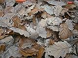 Poppy's - Lettiera per Acquario e terrario in Legno di Quercia essiccato, 10 Litri, Foglie di Quercia essiccate, isopodi bioattivi, rettili, ECC.