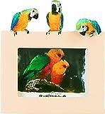 E&S Pets 35316–13piccolo uccello cornici