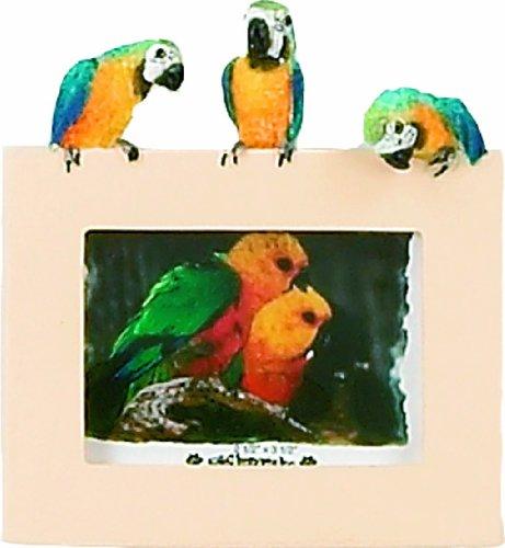 E&S Pets 35316–13Kleine Vögel Frames