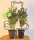 Gartenzaubereien Buchsbaum -Former Bär Komplett Set inkl. 2 Buxus