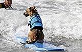 Rettungsweste, Schwimmtraining Hundeweste,