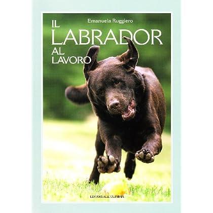 Il Labrador Al Lavoro