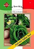 Salatsamen - Chicorée Cicoria Grumolo Verde von Thompson & Morgan