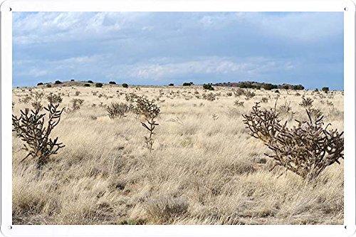 Metallo Poster Targa in metallo Piastra ALW07830 Retro Vintage parete Décor by hamgaacaan (20x30cm) - New Mexico Piastra
