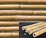 Bambusrohr Petung 300cm gelb braun mit Riesen Durch. 11 bis 13cm, behandelt mit Borsalz von bambus-discount - Bambus Rohr Bambus Latten farbige Bambusrohre Bamboo Bambus Halbschale Bambusstangen Bambusstab Rohre aus Bambus Stab