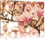 Rosa Magnolienblüten im Frühling, Format: 100x70 auf Leinwand, XXL riesige Bilder fertig gerahmt mit Keilrahmen, Kunstdruck auf Wandbild mit Rahmen, günstiger als Gemälde oder Ölbild, kein Poster oder Plakat