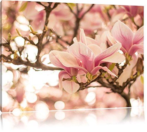 Rosa Magnolienblüten im Frühling, Format: 120x80 auf Leinwand, XXL riesige Bilder fertig gerahmt...