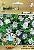 Hainblume 5 Spot Saatband für Balkon & Terrasse zierlich reiche und lang anhaltende Blüte Nemophila 53030