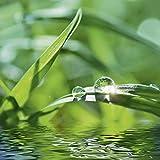 Artland Qualitätsbilder I Glasbilder Deko Glas Bilder 30 x 30 cm Botanik Gräser Foto Grün H8FS Grüner Hintergrund mit Gras