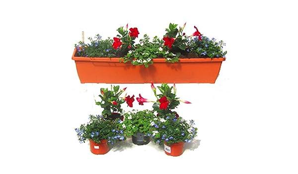 Balkonpflanzen Set Fur Balkonkasten 80 100 Cm Lange 5 Pflanzen