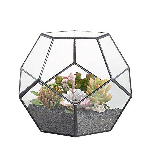 gzq Pflanzen Halterung Klar Glas Geometrische Terrarium Container Polyeder Box Desktop Übertopf für vollmundigen Farn Moos Air Pflanzen Miniatur Outdoor Fairy Garden Deko Geschenk Fairy Garden Box