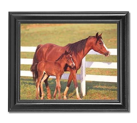 Chevaux Jument et Par Colt clôture Cowboy Tableau Photo Affiche encadrée