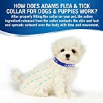 pet dogs and cats flea &tick collar with natural botanical essence for controlling remedy repelling flea egg, mosquito,lice with high-efficiency for large/medium/small dogs and cats (small dog) Pet Dogs and Cats Flea &Tick Collar with Natural Botanical Essence for Controlling Remedy Repelling Flea Egg, Mosquito,lice with High-efficiency for Large/Medium/Small Dogs and Cats (Small Dog) 517TXErBTRL