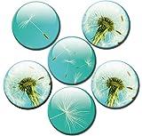 Kühlschrankmagnete Pusteblume Magnete für Magnettafel stark 6er Set mit Motiv Blumen groß rund 50mm Türkis
