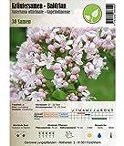 Kräutersamen - Baldrian/Valeriana officinale 30 Samen