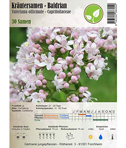 Semi di erbe - Valeriana comune / Valeriana officinale 30 Semi