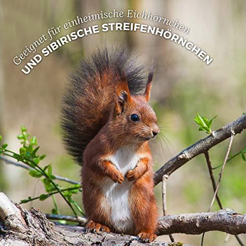 AniForte Wildlife Premium Eichhörnchenfutter 1 kg für Eichhörnchen und Streifenhörnchen – Naturprodukt Mischung, Besondere und artgerechte Eichhörnchen Fütterung – Unsere Spezial Futtermischung - 5