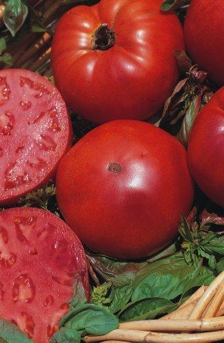 JustSeed Tomate, Super Marmande, kleine Gartenpackung, 20Samen