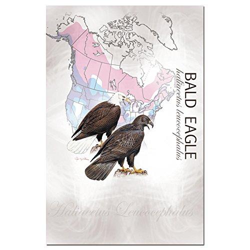 Baumfreie Grüße econotes blanko Note Karten, passende Briefumschläge, blanko Stationäre Card Set, 10,2x 15,2cm Bald Eagle, 12Stück (fs66575) (Store-gruß-karten)
