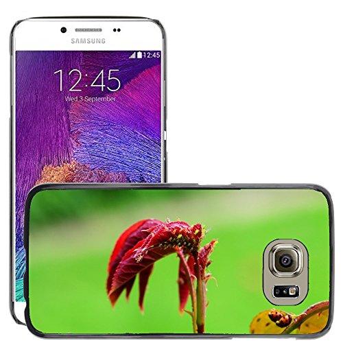 grand-phone-cases-carcasa-funda-prima-delgada-slim-casa-case-bandera-cover-shell-para-m00141760-bugs