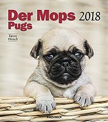 Der Mopskalender 2018: Das Original von Knesebeck