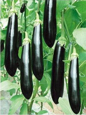 NOUVELLES 100pcs Violet Noir Aubergine Seeds sain Délicieux Bonsai plantes de semences de légumes Dans Maison et jardin Happy Farm