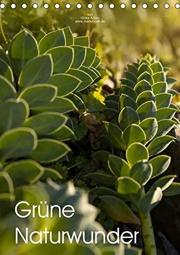 Birke-brücke (Grüne Naturwunder (Tischkalender 2020 DIN A5 hoch): Das zarte Grün der Natur verzaubert uns das ganze Jahr (Familienplaner, 14 Seiten ) (CALVENDO Natur))