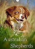 Australian Shepherds (Wandkalender 2019 DIN A4 hoch): 13 wunderschöne Australian Shepherd Motive für das ganze Jahr (Monatskalender, 14 Seiten ) (CALVENDO Tiere)