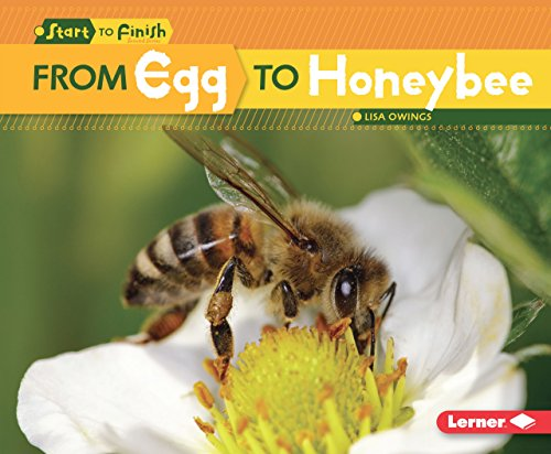 (From Egg to Honeybee (Start to Finish, Second Series) (English Edition))