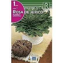 BULBO ROSA DE JERICÓ ...