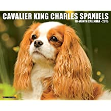 Just Cavalier King Charles Spaniels 2015 Wall Calendar by Willow Creek Press (2014-06-15)