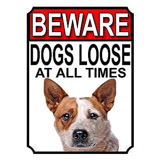 SHAWPRINT Beware Hunde Loose at All Times Metall Schild Australian Cattle Dog 200mm x 150mm (973h1)