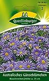 Blaues Gänseblümchen, Zwerg Margerite, Brachycome iberidifolia, ca. 65 Samen