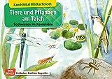 Tiere und Pflanzen am Teich. Kamishibai-Bildkartenset.: Entdecken - Erzählen - Begreifen: Sachwissen.
