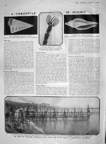 COLLINA 1909 DELLA MOSCA COMUNE DEL PETROLIO SUMMERLAND CALIFORNIA