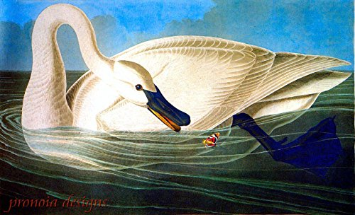 Trumpeter Swan (Counted Cross Stitch Pattern: