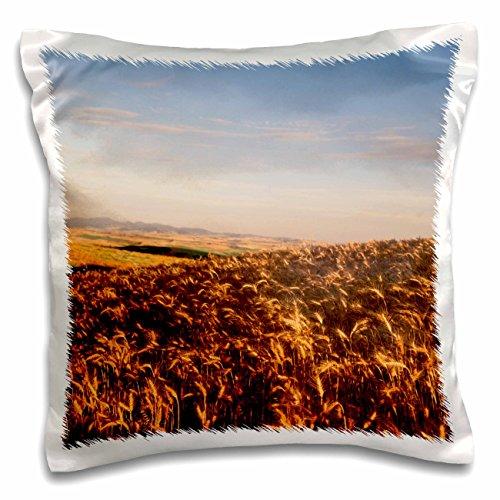 danita-delimont-farms-wheat-farm-palouse-washington-state-usa-us48-swe0137-stuart-westmorland-16x16-